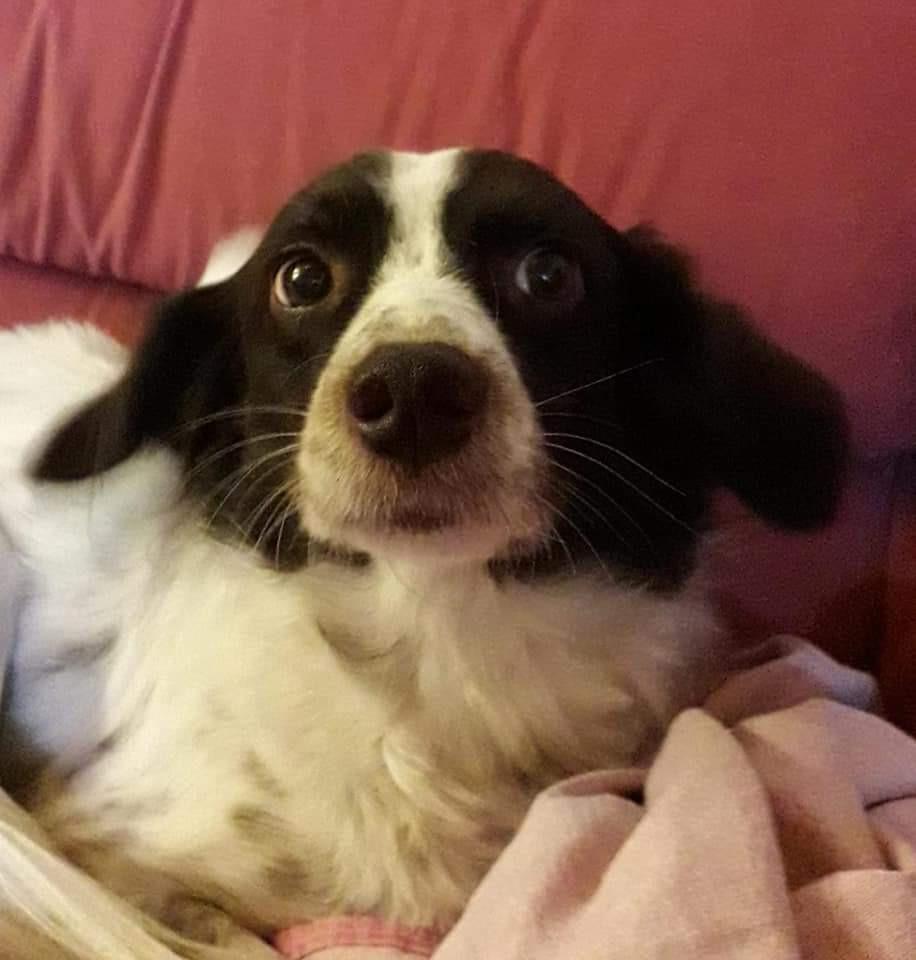 La rinascita di Pepita, la cagnolina che aveva paura del temporale.